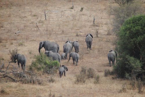 Tanzania 2012 pag 18 parco tarangire - Letto di un fiume in secca ...